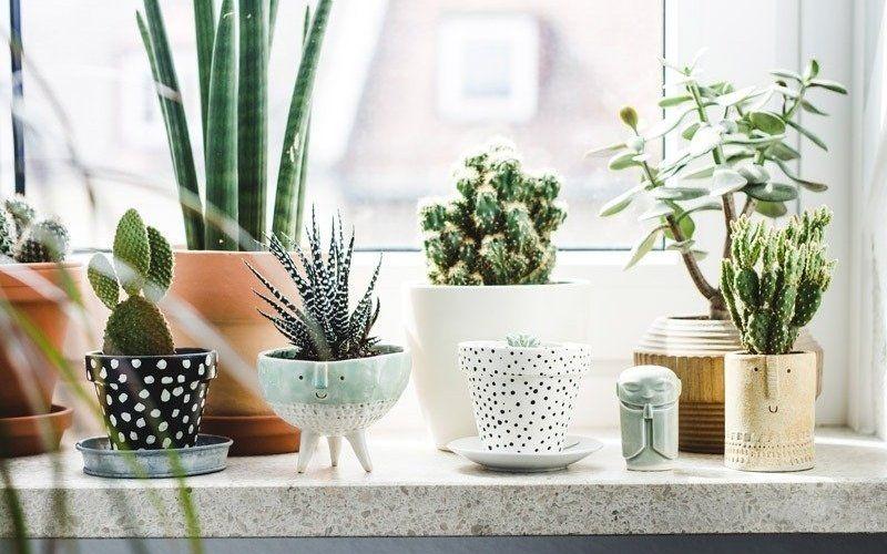 Чем украсить подоконник - Комнатные растения