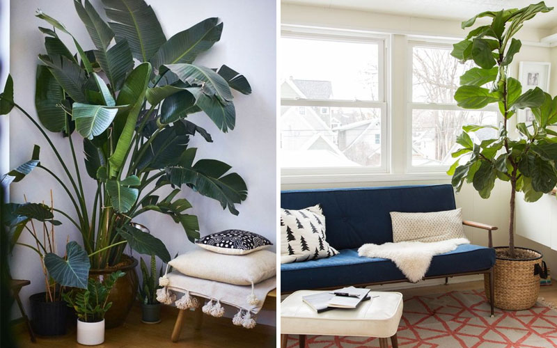 Растения в угол гостиной