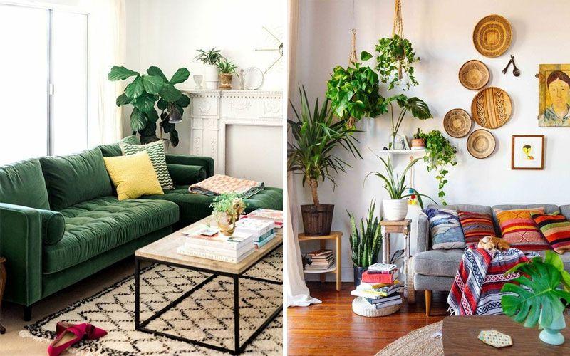 Растения в углу гостиной